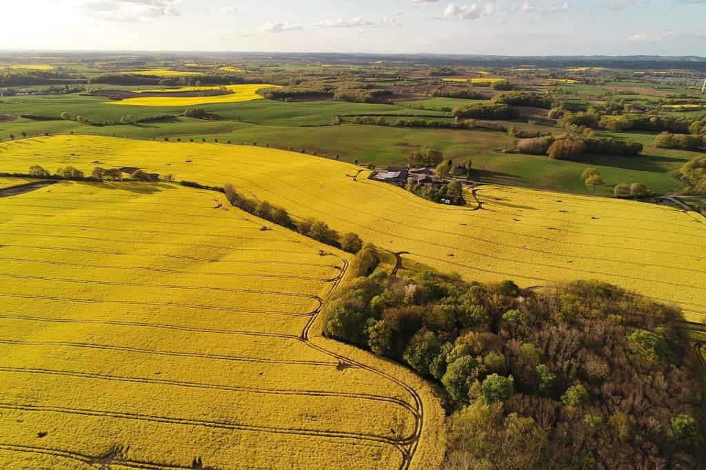 oilseed rape, fields, drone